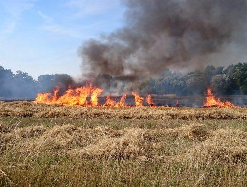 UPOZORNENIE | Zákaz vypaľovania suchej trávy