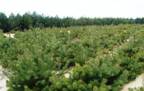 Lesy SR upozorňujú: