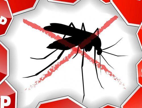 Ako na komáre tento rok?